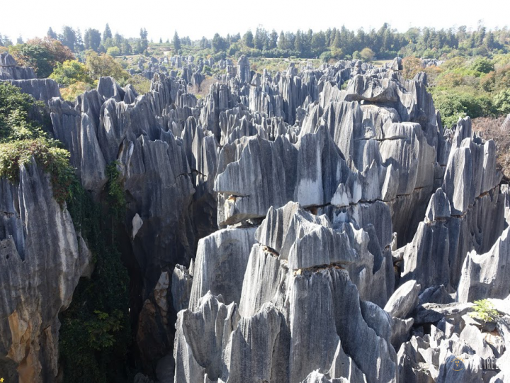 Ein Wald aus Steinen